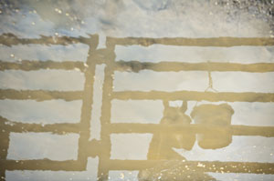 Horse-and-water-reflection-