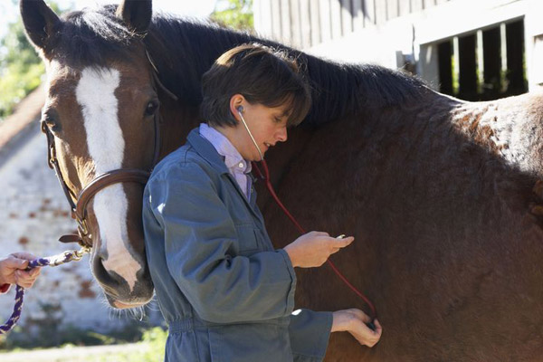 Stories Rectal Temperature Taking http://blog.smartpakequine.com/2011/01/how-to-take-your-horse%E2%80%99s-vital-signs/