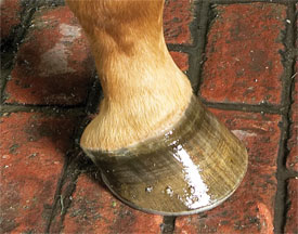 Hoof-on-bricks-thumb