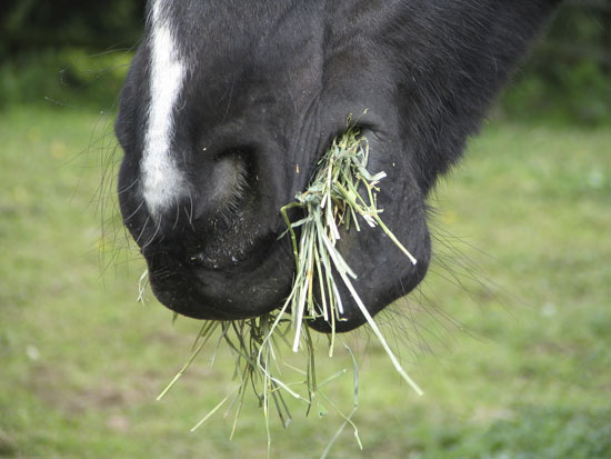 how to get horse to eat supplements