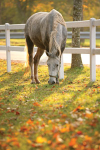 Autumn-horse-thumb