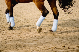 Dressage-horse-legs-thumb