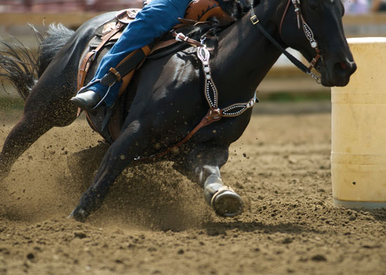 Black quarter horses barrel racing - photo#1