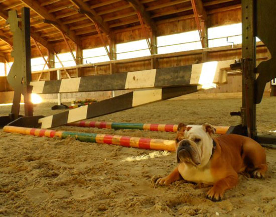 Barn Dogs How To Make Good Manners Stay Smartpak Blog
