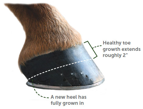 A Year in The Life of a Hoof | SmartPak Blog
