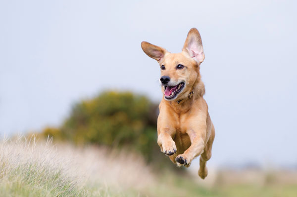 Happy_dog_jumping