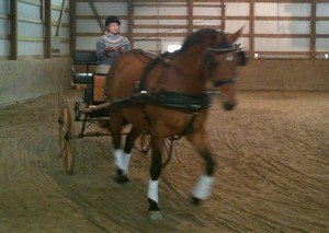 Lydia driving a corner at the trot, could have more bend!