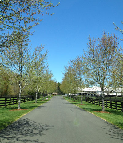 Driveway to Windsor Show Stables (home!)