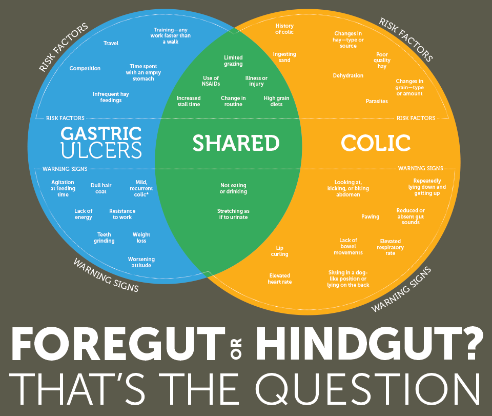 Foregut or Hindgut? That's The Question - Part 1