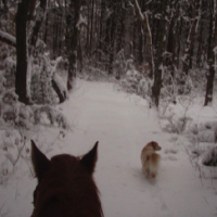 horse-dog-winter-ride