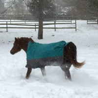 sawyer snow trot