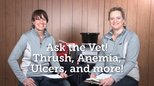 Ask the Vet - Thrush Anemia Ulcers and more_2016-03_thumb