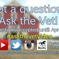 Ask the Vet needs your questions - April 2016_thumb