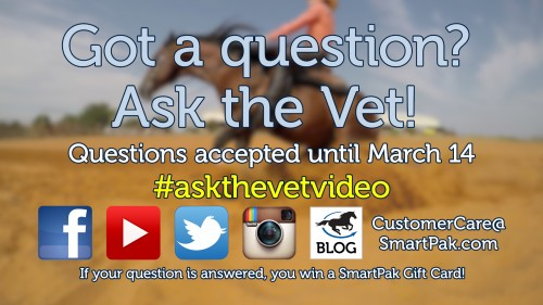 Ask the Vet needs your questions - March 2016_thumb