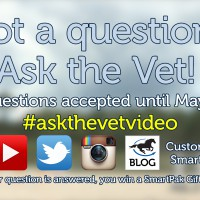 Ask the Vet needs your questions - May 2016_thumb