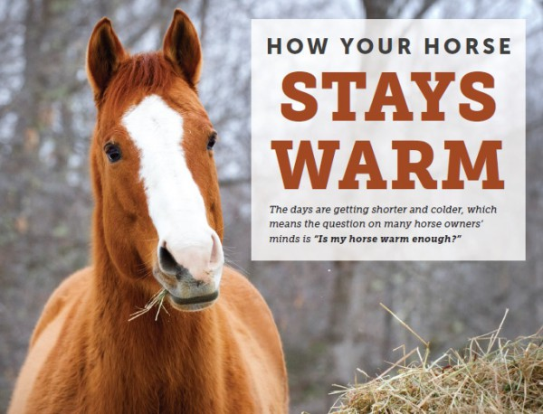 how-your-horse-stays-warm
