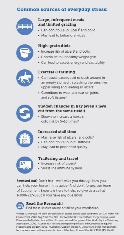The Smart Horse Owner's Guide to Horse Nutrition