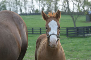 foal_headshot-thumb