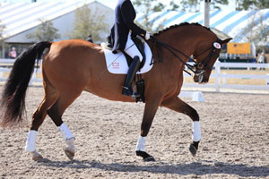 Dressage-horse-moving-2-thu