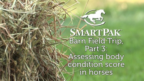 SmartPak Barn Field Trip Part 3 - Assessing body condition score in horses_thumb