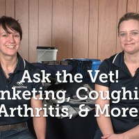 Ask the Vet – Blanketing, Coughing, Arthritis, and More - Feb 2016_thumb