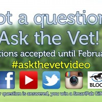 Ask the Vet wants your questions_Feb16_thumb