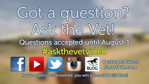 Ask the Vet needs your questions - August 2016_thumb