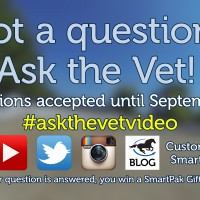 Ask the Vet needs your questions for October 2016_thumb