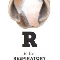 R is for Respiratory Health