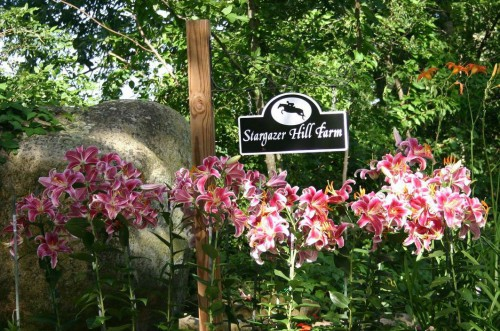 sghf-farm-sign-with-stargazer-lillies