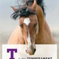 T is for temp