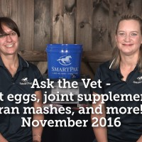 ask-the-vet-bot-eggs-joint-supplements-bran-mashes-and-more-november-2016_thumb