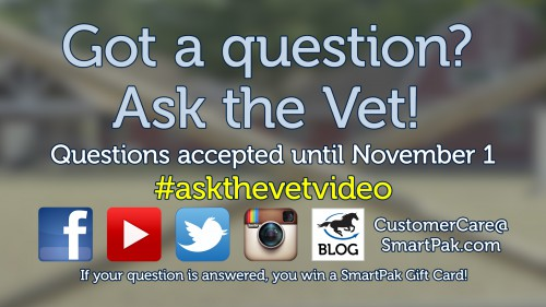 ask-the-vet-needs-more-questions-for-our-december-video_thumb