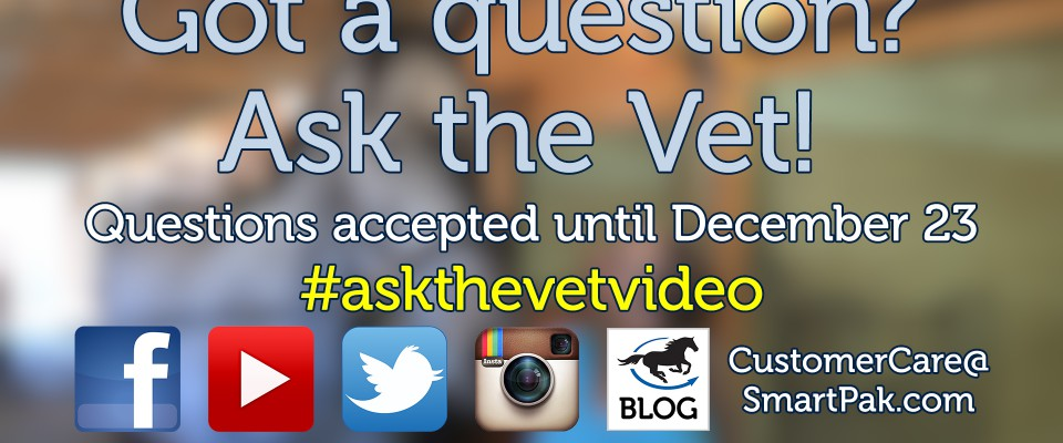 ask-the-vet-needs-your-questions-for-our-next-video_thumb